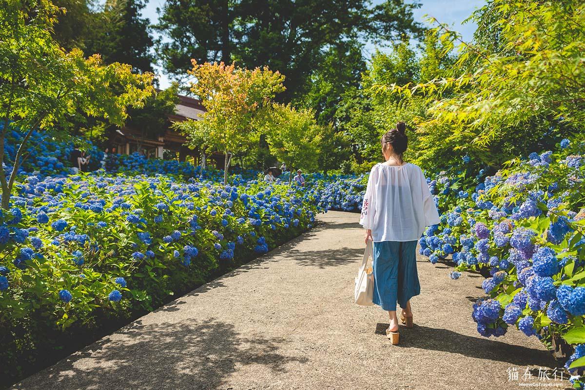 雲昌寺 - 入口處的紫陽花園