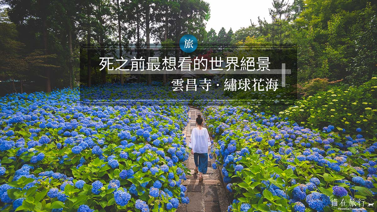 雲昌寺-秋田-繡球花-紫陽花
